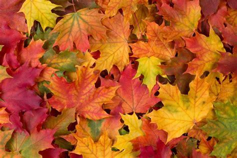 Vocabulario sobre el otoño en inglés | SpanishDict