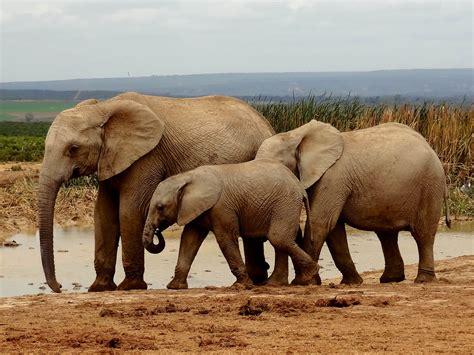 Voir des animaux en Afrique du sud : quelle réserve ou parc