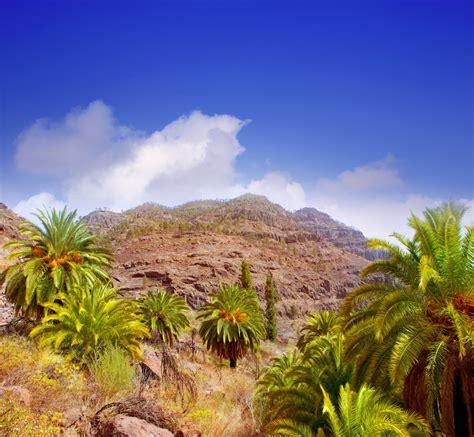 Vuelos a Gran Canaria Las Palmas desde 30 € | Skyscanner