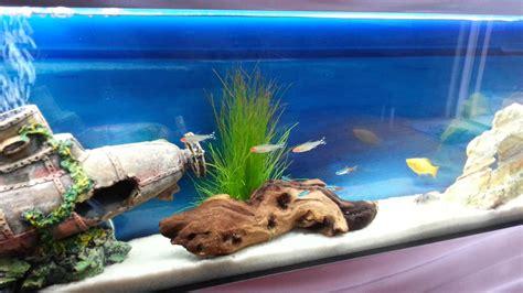 Wall mounted aquarium fish tank tropical fish Plasma style ...