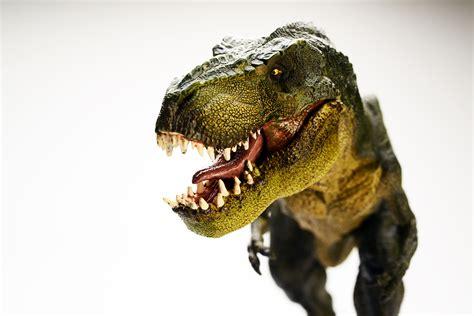 Wallpaper Dinosaur, Tyrannosaurus, T Rex, 5K, Animals, #848