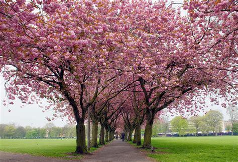 Wallpaper Nature Spring Seasons