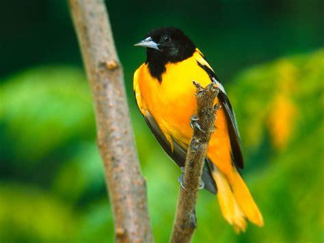 wallpaper proslut: Bird Wallpapers