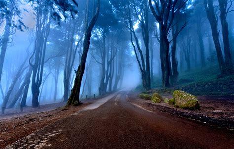 Wallpapers 4K de Bosques | Fondosdepantalla.top