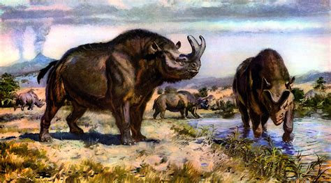 Wallpapers Brontotherium Animals Ancient animals