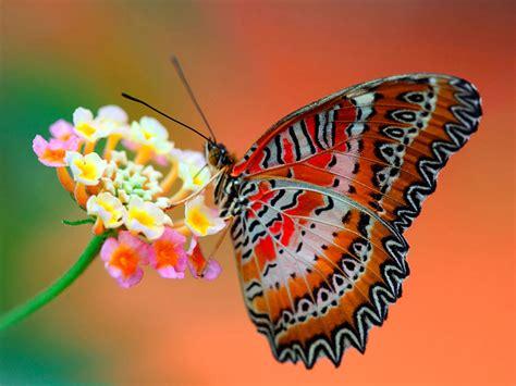 wallpapers: Butterfly Desktop Wallpapers
