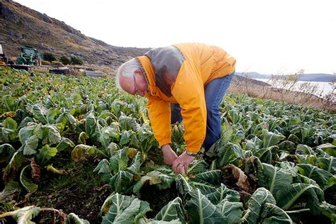 Warming Revives Flora and Fauna in Greenland  2007 article