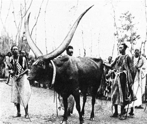 watusi history | World Watusi Association