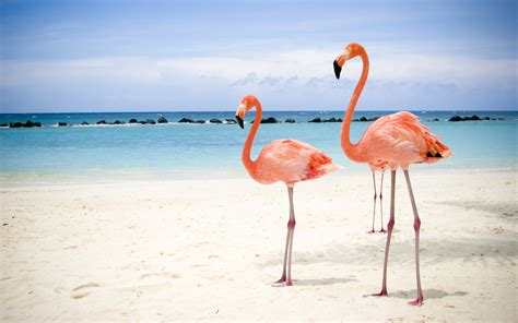 Weekend Diversion: The Physics of Flamingos – Starts With ...