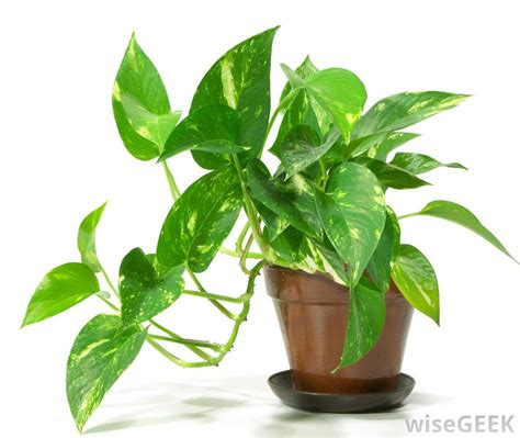 What are the Different Types of Pots for Plants?