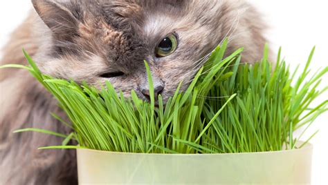 What common plants are poisonous to cats?   Healthy Cats ...