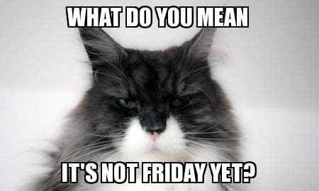 What Do You Mean It's Not Friday Yet? | Cute animals ...