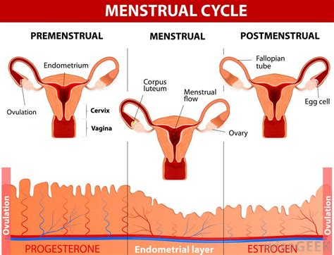 What is an Early Menstrual Period? (with pictures)