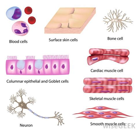What is Cytology?  with pictures