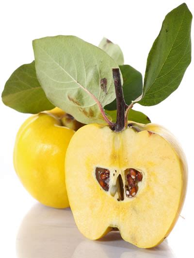 What is Quince Fruit? The Secret Food of Fall + Quince ...