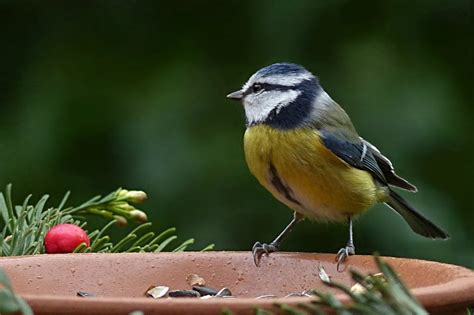 What to Feed Birds In the Winter | Moral Fibres   UK Eco ...