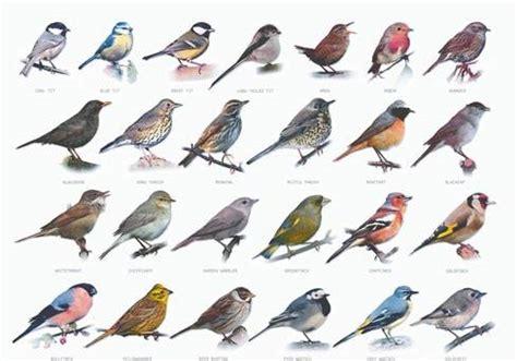 What's that bird? - BelfastTelegraph.co.uk