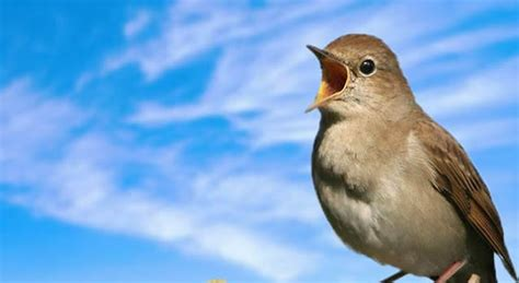 » When the Nightingale Stopped Singing