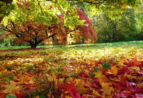 Where to see best Autumn colours at places near me   Great ...