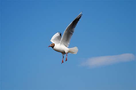 White Bird Flying Above Blue Skies during Daytime · Free ...