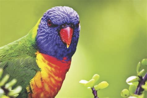Why are tropical birds so colourful? | AnimalAnswers.co.uk ...