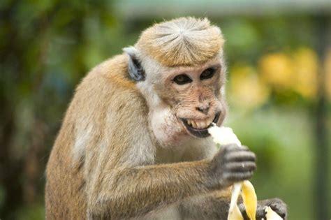 Why Boiling a Banana May Help You Sleep Better | TipHero