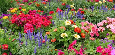 WHY I LOVE ANNUAL FLOWERS | Color The Garden