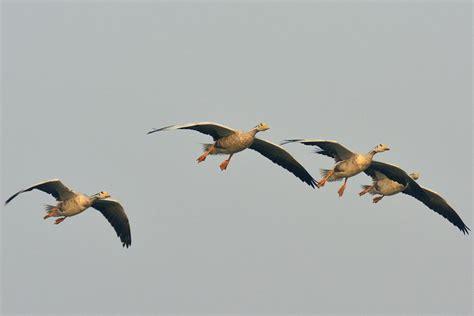 Why Migratory Birds? | World Migratory Bird Day