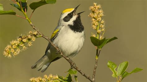 Why songs, try exotic bird calls as ringtones | IndiLeak ...