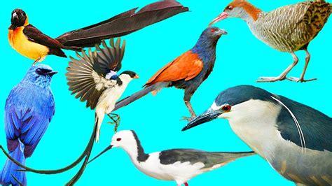 Wild birds: List of the bird species #3   YouTube