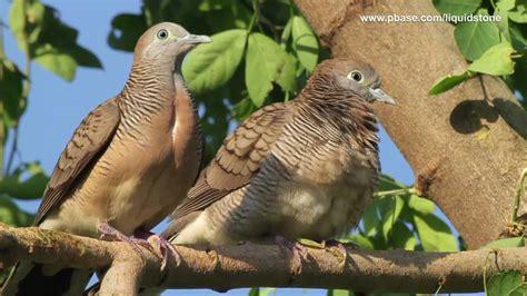 Wild Birds of Paranaque (Philippines) - YouTube