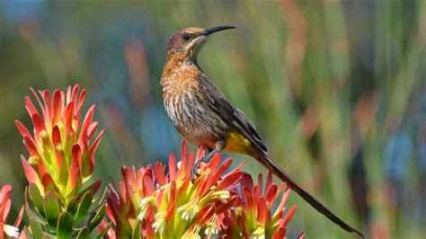 Wild Birds of Southern Africa through my Lens....... - YouTube