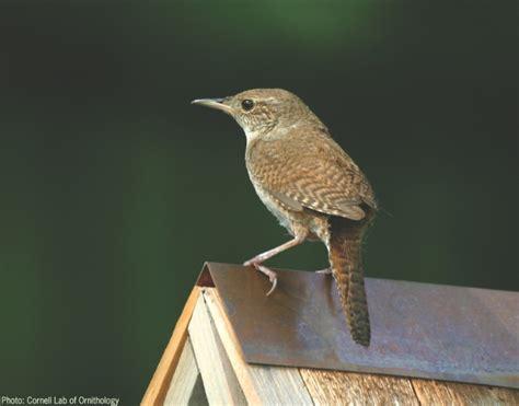 Wild Birds Unlimited: Little brown bird with long beak