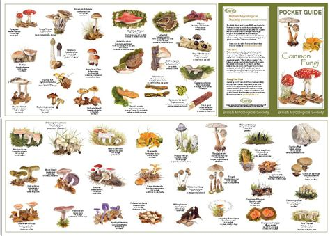 Wild+Mushroom+Identification+Charts | Order by mail using ...