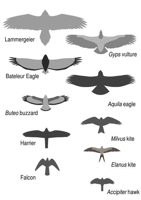 Wings Over ColoradoWings Over Colorado • Breeding Birds-of ...