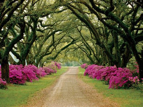 Winton House: A Tree Lined Drive