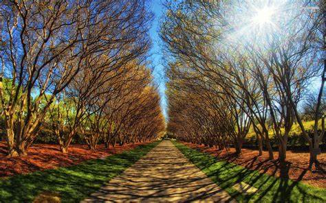 Wonderful Trees Path Sun Light wallpapers | Wonderful ...
