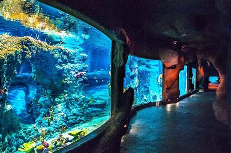 Wroclaw Zoo   Acrylic Polishing, Public Aquariums | AQUALIFE