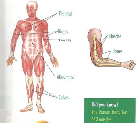 ¡Ya estamos en primaria!: THE MUSCLES  Los músculos