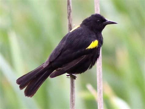 Yellow Bird With Black Wings - Tv Nude Scenes