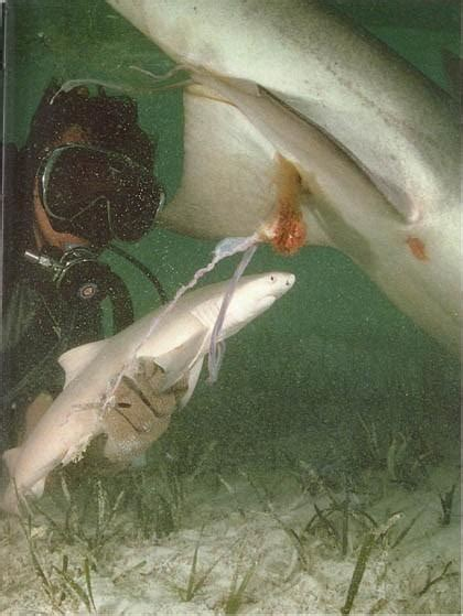 Yes, Shark Hunting is legal, but is it necessary ...