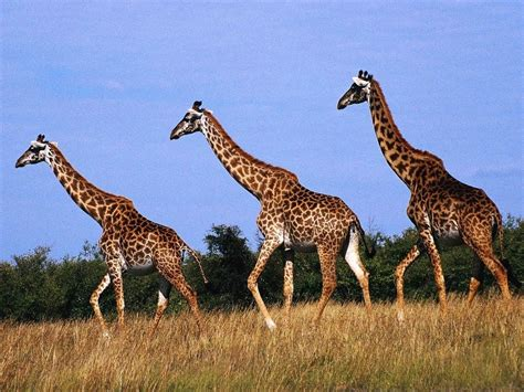 Zimbabwe's Animals - Zimbabwe By: Molly D