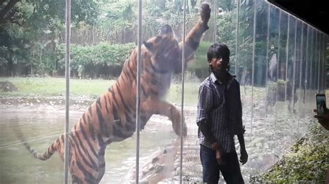Zoo Animals Attacks ???? [Epic Laughs] - YouTube