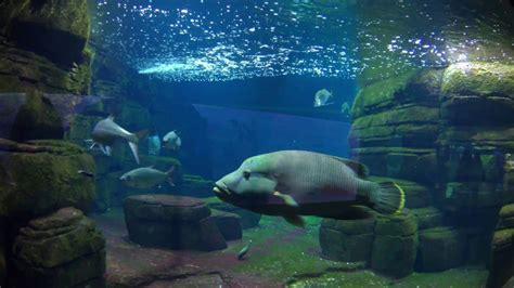 Zoo Aquarium Berlin 4K   YouTube
