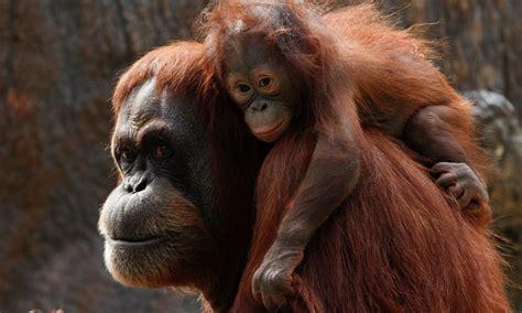 Zoo Atlanta in Atlanta, GA | Groupon