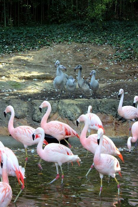 Zoo Atlanta Zoo Atlanta Groupon | Autos Post