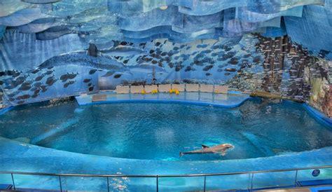 Zoo De Barcelona Horarios Delfines   Best Zoo 2017