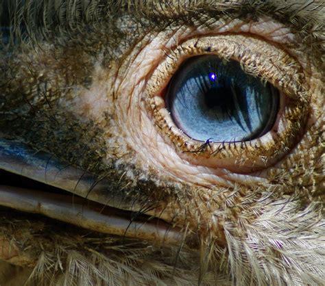 Zoo de Castellar – Info Sotogrande