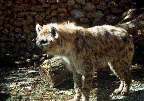 Zoo de Castellar   Web oficial de turismo de Andalucía