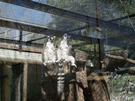 Zoo de Córdoba: Opiniones, Info, Precios, Ofertas ...